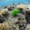 Is seaweed the future of green 3D printing?